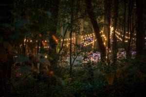 Iluminacion con guirnaldas de bombillas bosque